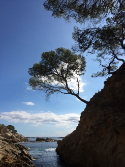 day-10b-walk-with-sandy7-cala-rovira2