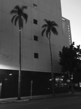 lights on palm trees